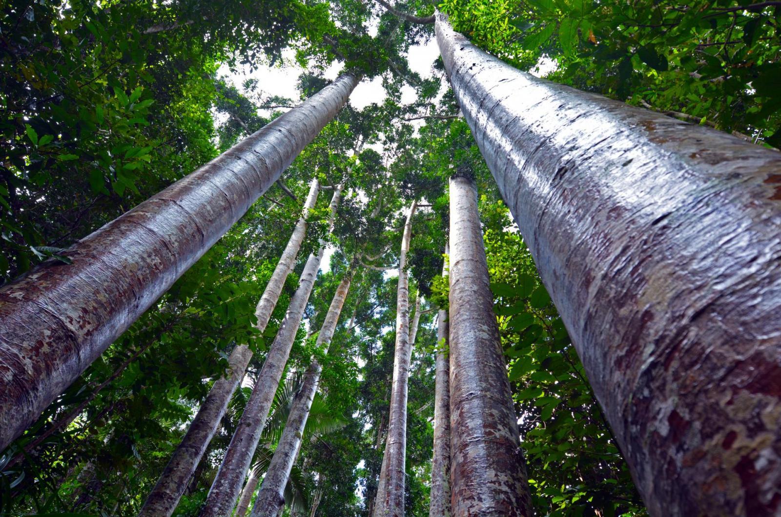 Australien Outback mal anders: Paronella Park in Queenland Australia
