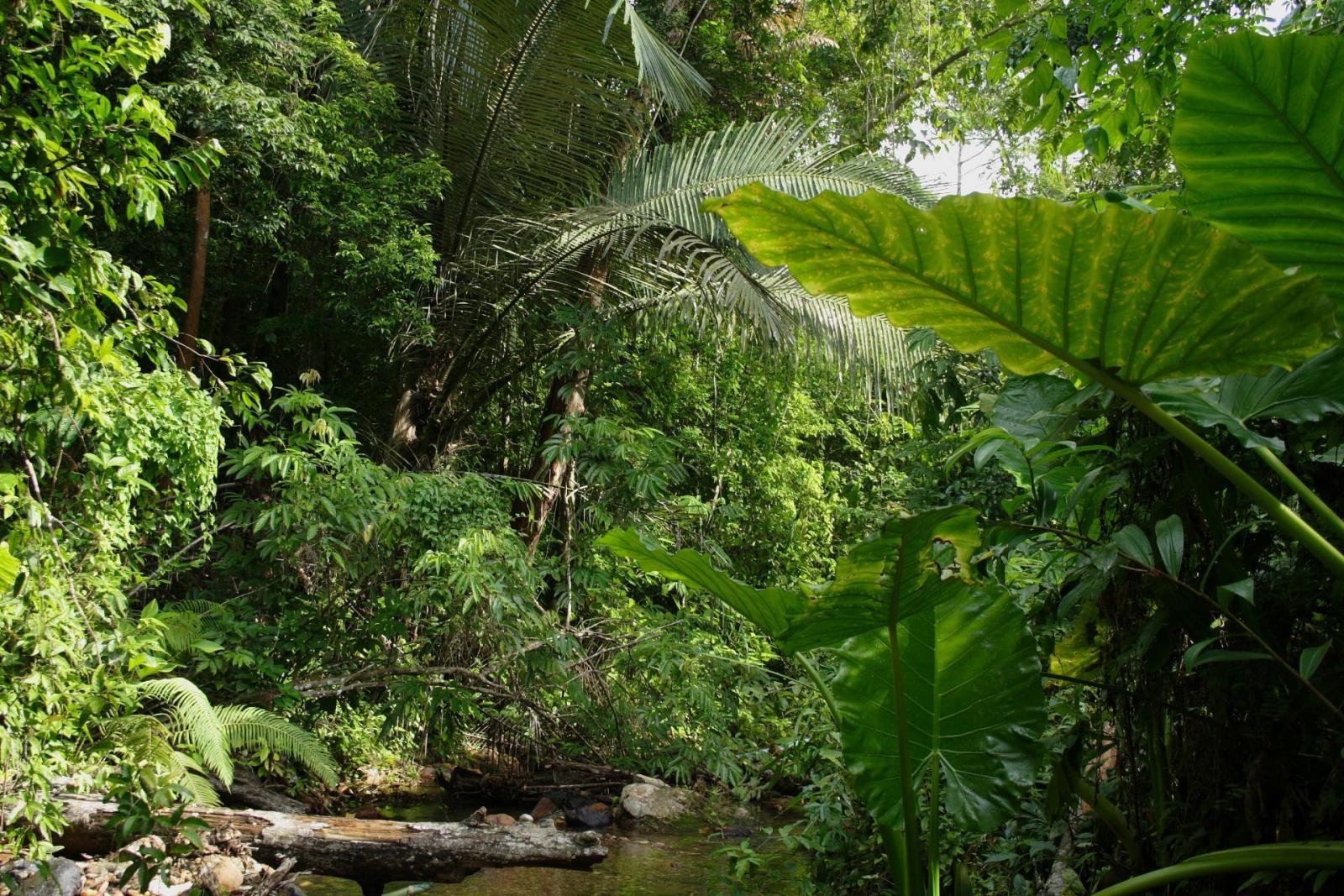 Regenwald meets Great Barrier Reef Australien