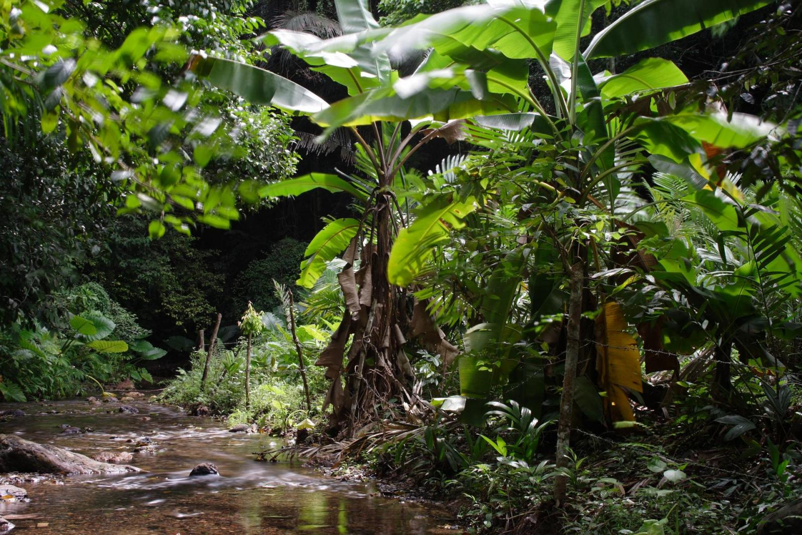beste Nationalparks in Australien, Daintree Nationalpark