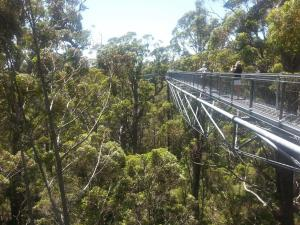Tree top walk valley of the giants, Perth Sehenswürdigkeiten Pass, Perth Pass