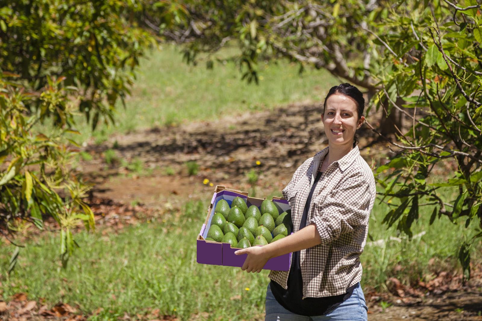 Work and Travel Australien: Erntehelfer auf der Avocado-Farm