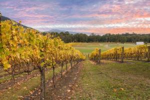 Yarra Valley Vineyard Wine VIC 161113221250009