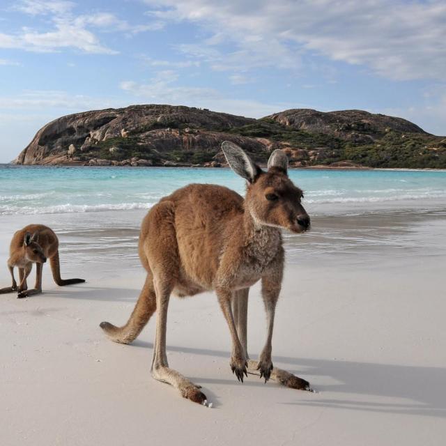 Schönste Strände in Australien