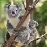 Der Brisbane Sehenswürdigkeiten Pass