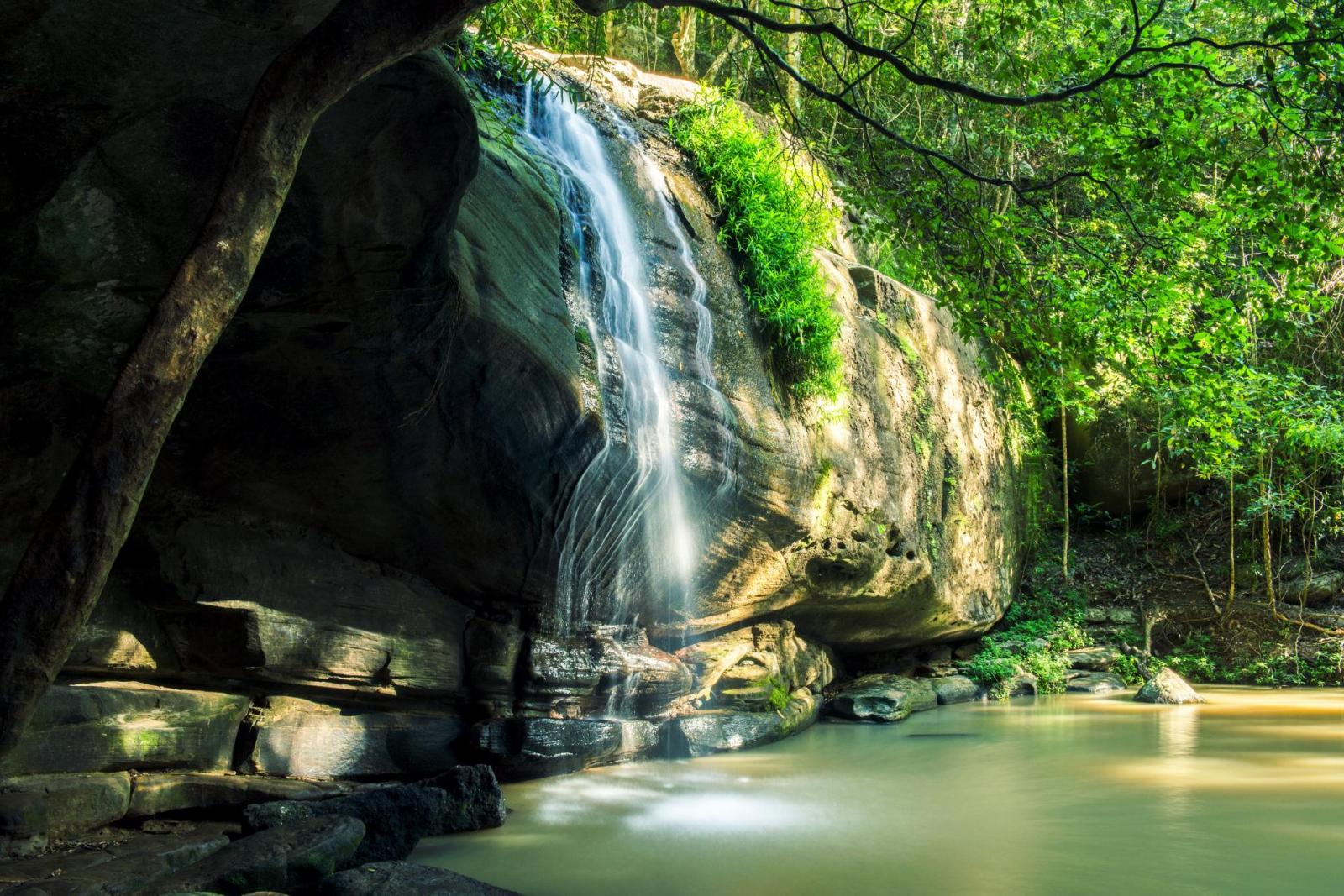 Serenity Falls Wasserfall Sunshine Coast Queensland Australien Regenwald