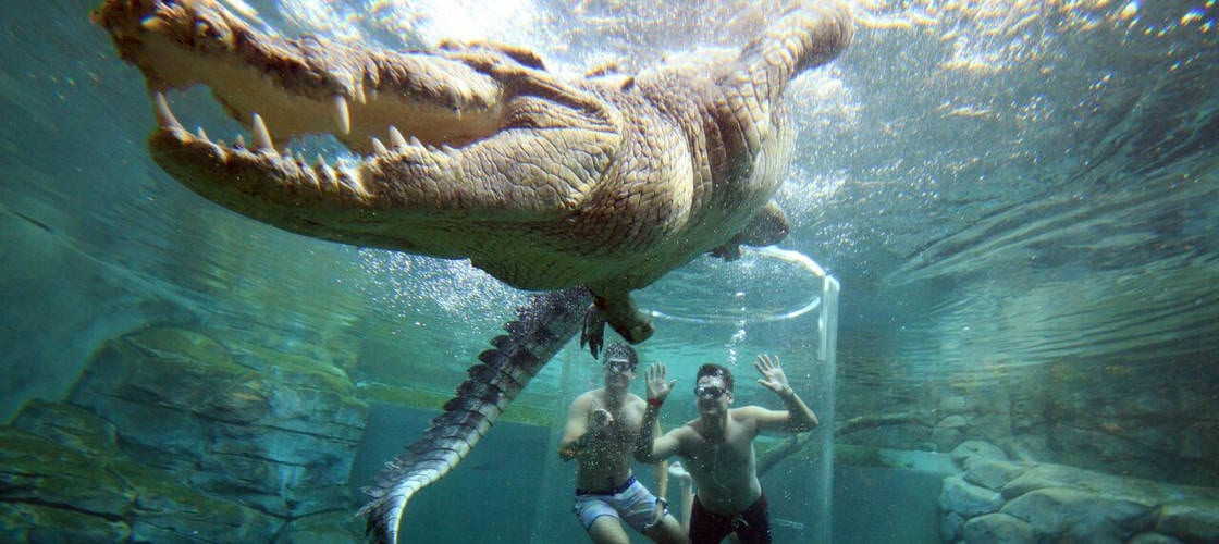 beste Sehenswürdigkeiten Darwin: Crocosaurus Cove Darwin