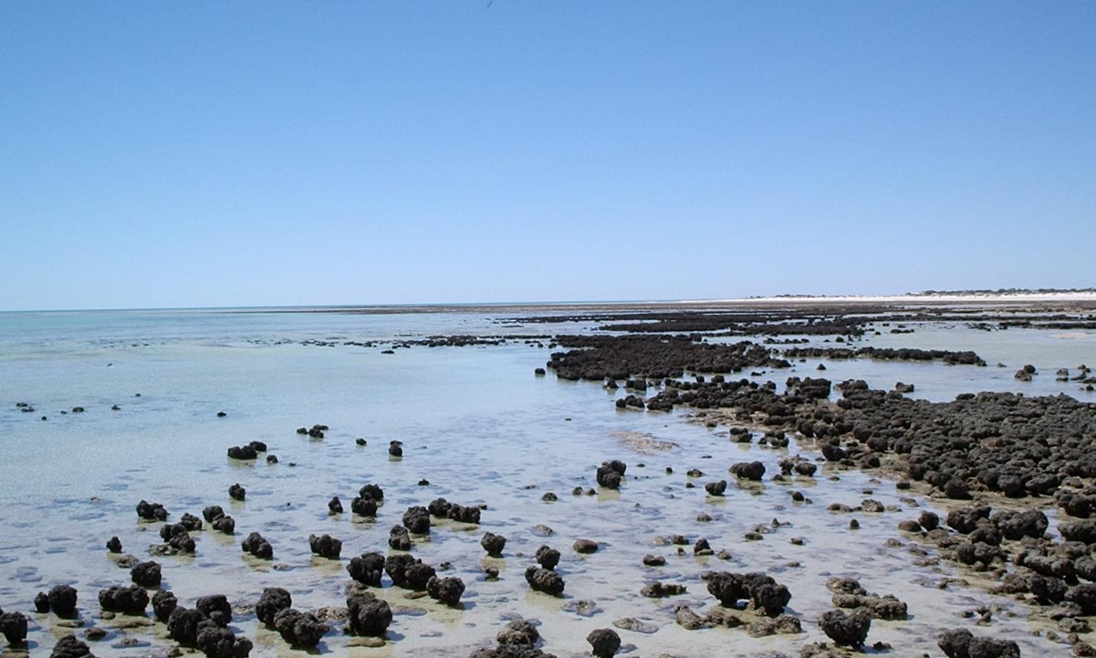 Stromatolites im Hamelin Pool
