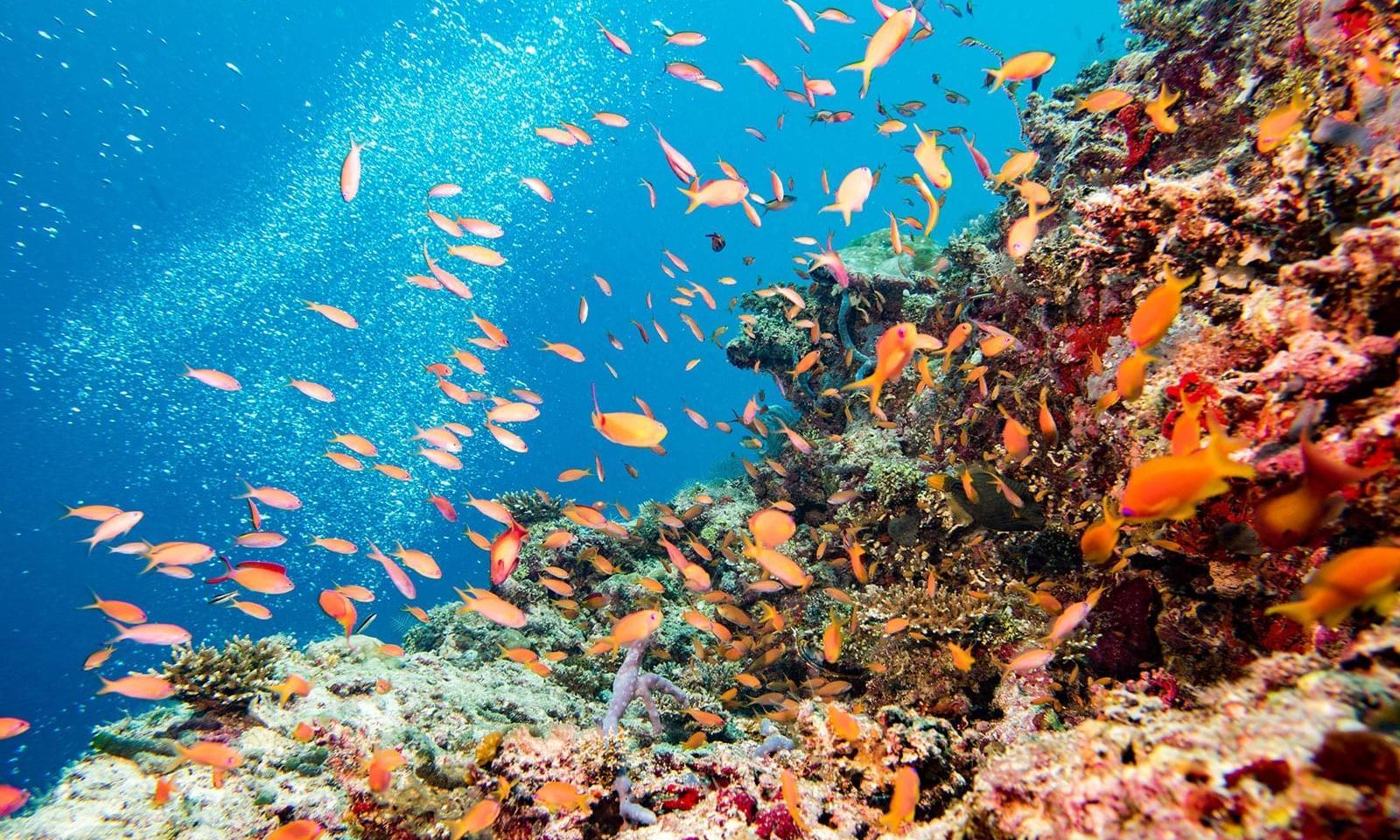 Rundreisen.de - Great Barrier Reef Australien