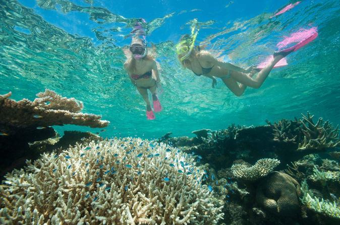 Great Barrier Reef Tauchen